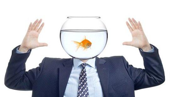 The Goldfish Effect
